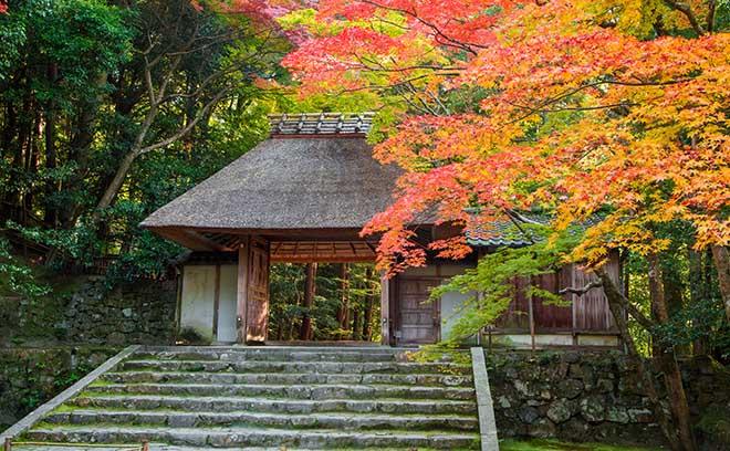 京都買屋翻修記①年報酬8%